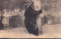 Dép. 75 - PARIS - Jardin Des Plantes - L´Ours. - Martin Grimpant à L´arbre. Ed. Moreau Frères N° 247 - Ours