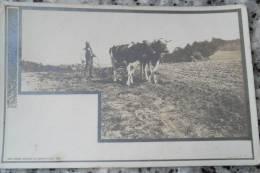 Vaches Cows Suisse - Paysans