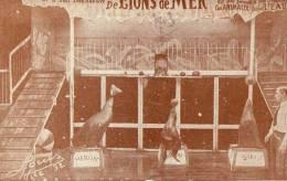 THEMES - CIRQUE - Williams Et Ses Lions Marins Dressés - Circus