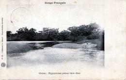 Congo Francais, Hippopotames Prenant Leurs Ebats, Karte Gelaufen Um 1905 - Congo Français - Autres
