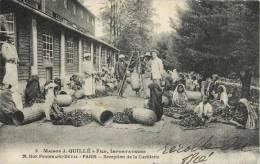 QUILLET IMPORTATEURS DE THE INDE COLOMBO RECEPTION DE LA CEUILLETTE AGRICULTURE TEA CONSERVES EMILE JACQUIER  LE MANS - Frankreich