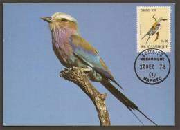 Mozambique Carte Maximum Rollier à Longs Brins Coracias Caudatus Oiseau 1978 Lilac-breasted Roller Bird Maxicard - Unclassified