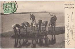 CPA EGYPTE EGYPT Chasse Au Crocodile Du Nil Timbre Stamp 1904 - Egypte