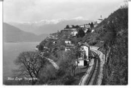 PINO LAGO MAGGIORE (VA) - PANORAMA - F/G - V: 1955 - Varese