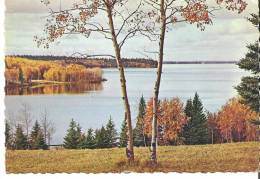 """Manitoba  The Delicate Beauty Of Aspen And Spruce Trees Is Mirrored In  Clear Lake. 6.5"""" X 4.5"""" 16 Cm X 11 Cm - Manitoba"""