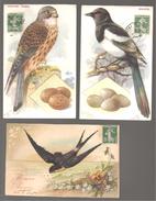 Trois Cartes Oiseaux - Pájaros