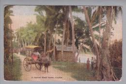 Sri Lanka Ceylon Road Scene 19??-10-10 Foto - Sri Lanka (Ceylon)