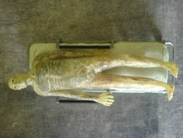X-FILES - Alien Sur Branquare - Figurines