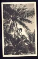 HONOLULU   Climbing For Coconuts     Old Postcard 1938 - Big Island Of Hawaii