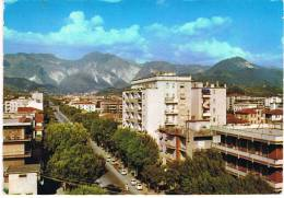 AVENZA(Carrara)- - Carrara