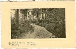 Kluisberg - Mont De L'Enclus : In Het Bos - Sous-bois - Kluisbergen