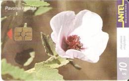 Nº 163 TARJETA DE URUGUAY DE LA FLOR PAVONIA HASTATA (FLOWER) - Uruguay