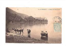 Lac Du BOURGET. - L'Abbaye De Haute-Combe. (Vaches) - France