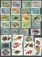 Vissen - Collections (en Albums)