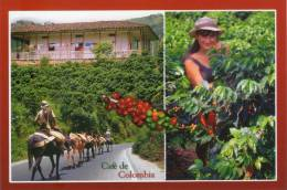 Lote PEP262, Colombia, Postal, Postcard, Cafe De Colombia, Coffee - Colombia