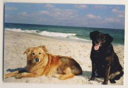 Animals - 2 Dogs On The Beach - Dogs