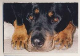 Animals - Dog Portrait - Dogs