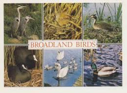Animals - Broadland Birds Multiview - Birds