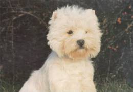 DOG POSTCARD -WEST HIGHLAND  WHITE TERRIER - Chiens