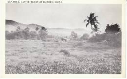 Guam, Carabao Native Beast Of Burden On C1940s/50s Vintage Postcard - Guam