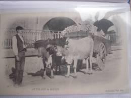 ATTELAGE DE BOEUFS  37 - Attelages