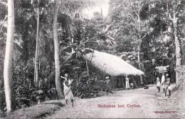 CEYLON, CEYLAN, Sinhalese Hut, Karte Um 1905 - Sri Lanka (Ceylon)