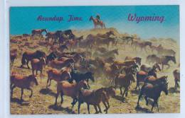 A HERD OF HORSES AT ROUNDUP TIME - WYOMING - Etats-Unis