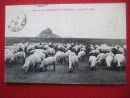 """50- LE MONT SAINT MICHEL - LES PRES SALES """" MOUTONS """" - Le Mont Saint Michel"""