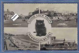 Carte Postale Angleterre Newbiggin-By-Sea  Chat Persan Trés Beau Plan - Other