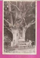 BECH      -   PELERINAGE * LE CHENE DE LA VIERGE Ou   LE CHENE DE HERSBERG *   -    Editeur : E.A. SCHAACK   N°/ - Cartes Postales