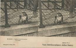 5 Paris Jardin Acclimatation Un Singe Edit ELD Vue Stereo Julien Damoy  Monkey - Singes