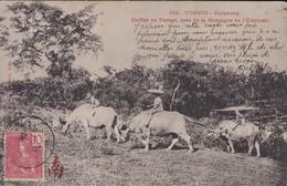 ASIE---TONKIN---haiphong---Buffles Au Pacage, Prés De La Montagne De L'éléphant---voir 2 Scans - Viêt-Nam