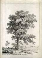 - ARBRE . EAU FORTE DU XIXe S.. 2e ETAT ? AVANT LA LETTRE . - F. Trees & Shrub