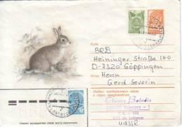 Fauna - Rabbit - Konijn - Lapin - Rongeurs