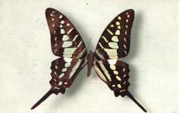 N°26396 -cpa Papilio Antheus (Afrique) - Papillons