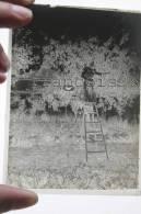 Lyon  Villeurbanne En 1901 - Mme Silland Dans Son Verger Sur Une échelle Ramassant Des Pommes - Plaques De Verre