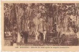 Indochine-Cochinchine- Vietnam- Bien Hoa Récolte Du Latet - Viêt-Nam