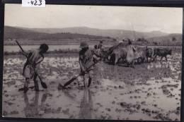 Antsirabe (Photo Select —) - Travaux Et Piétinage Dans Les Rizières - Riziculteurs - Troupeau De Bœuf - Vers 1957 (-423) - Madagascar