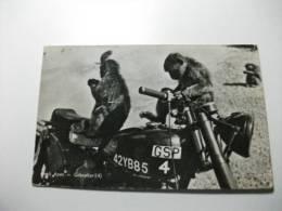 Gibraltar Gibilterra Rock Apes Scimmie Su Moto G.s.p. 42yb85 - Gibilterra