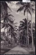 Madagascar - Mananjary : Route Et Palmiers ; Vers 1957 ; Trous D'épingles : Scan (-450) - Madagascar