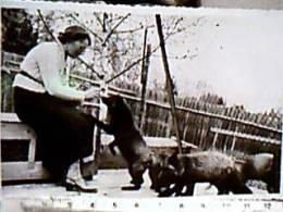 BOLZANO SIGNORA  CRUPNER ? CON SUE VOLPI IN RECINTO VOLPE FOX  Fotografica S1955  EA8198 - Animaux & Faune
