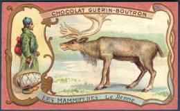 Chromo Chocolat Guerin-Boutron Les Mammifères Le Renne - Guerin Boutron