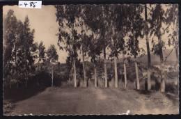 Madagascar - Nossi-Bé : Allée De L'Hôpital (1962) (-485) - Madagascar
