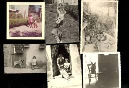 6 Photographies Originales CHIEN Berger Allemand Dog Cane Hund - Photos