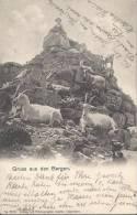 5353 - Gruss Aus Den Bergen Les Chèvres - Animaux & Faune