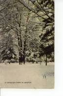 A Canadian Park In Winter 1909 - Canada