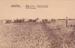 Belgian Congo Elevage De Bovides - Belgian Congo - Other