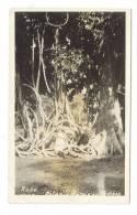 TRINIDAD  ( B.W.I. = British West Indies ) /  BOTANIC  GARDENS , ROPE  TREE  /  Copy-Right  PEREIRA & Co. - Trinidad