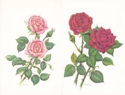 Lot De 4 Cartes Doubles Sur Le Thème Des Roses - B. Flower Plants & Flowers