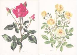 Lot De 4 Cartes  Sur Le Thème Des Roses - B. Flower Plants & Flowers